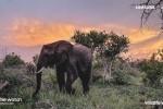 Samsung lancia Wildlife Watch, il progetto che invita a diventare ranger virtuali