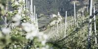 La rete di sentieri tematici del paese di Tirolo, in Alto Adige