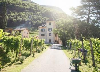 Una vacanza in vigna: Tenuta Kornell a Settequerce, in Alto Adige