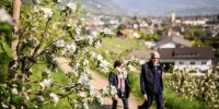 Regione Lana: aprile è il mese delle fioriture dei meli