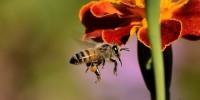 La tutela degli insetti impollinatori al centro della nuova direttiva del Governo