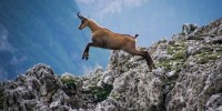 WWF Italia e Parco Nazionale Gran Sasso: iniziative comuni di educazione e formazione ambientale