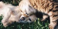 Il cane o gatto ha le pulci? Ecco le cose importanti da sapere