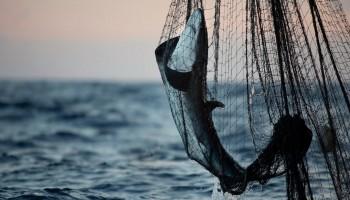 Greenpeace: muri della morte, pratica di pesca distruttiva che minaccia l'oceano indiano