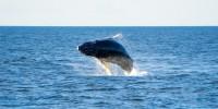WWF: i resti di una balenottera comune affiorano nella spiaggia Oasi Le Cesine