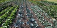 Dagli antiparassitari naturali alle varietà più adatte: consigli per un orto sostenibile