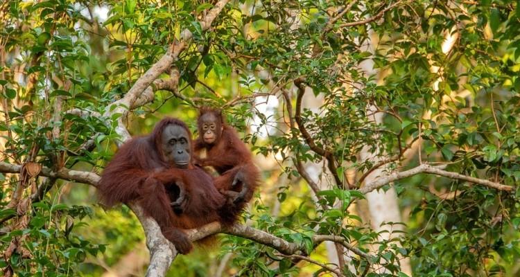 Stop oli palma e soia per biocarburanti e elettricità dal 1 gennaio 2023