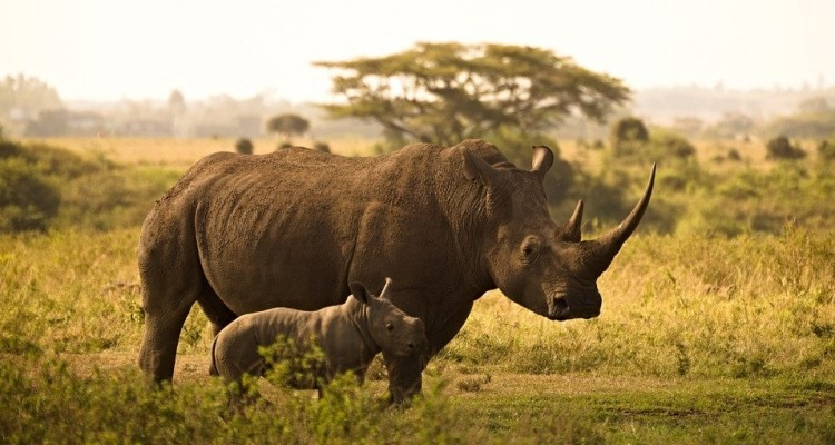 Nepal, rinoceronti in aumento: + 16% rispetto al 2015