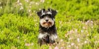 Ecco cosa fare quando il cane o il gatto mangia l'erba e vomita