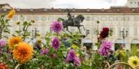 """Forestopia: il progetto di riforestazione """"diffusa"""" per una Torino più verde"""