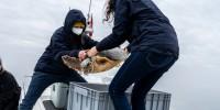 Nikon con Radar Magazine nel progetto Sailing For Blue Life per il recupero delle tartarughe marine