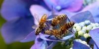 Giornata delle api, WWF: una petizione per salvare api e agricoltori