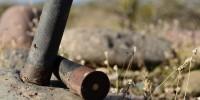 WWF: il piombo fa strage di rapaci