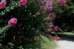 Dal 19 al 22 giugno la Rete orti della Lombardia festeggia il solstizio d'estate
