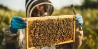 Relais & Châteaux dietro le quinte: le api, alleate nascoste di cucina e cantina