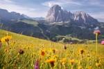 Flowering Dolomites, la fioritura in alta montagna