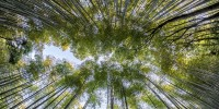 """Apre la prima """"BancaOssigeno"""", il nuovo progetto di SaveHuman e Forever Bambù"""