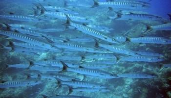 WWF: il riscaldamento del Mediterraneo sta accelerando