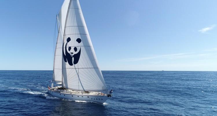 WWF: salpa la Blue Panda nel Mediterraneo