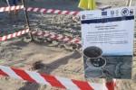 WWF: tartarughe marine, arriva il primo nido in Calabria