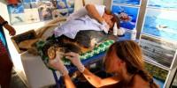 E.ON: inaugurato Pronto Soccorso per tartarughe marine sull'isola di Filicudi
