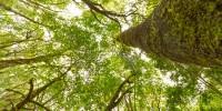 Ripristinare le foreste in Europa aumenterebbe le precipitazioni estive
