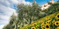 Un'estate di fiori e di colori ai Giardini di Castel Trauttmansdorff