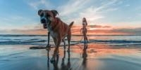 "Cani e vacanze, il vademecum per un'estate ""pet-relax"""