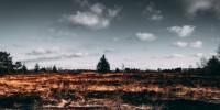 Roghi Sardegna, WWF: solo il 4% degli incendi dovuto a cause naturali