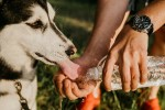 Colpo di calore nel cane, ecco come riconoscerlo e cosa fare per evitarlo