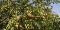 Ambiente e solidarietà: nascono due nuovi frutteti solidali in Sicilia