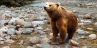 """Orso marsicano, WWF: a settembre nel parco della maiella il """"Tour della convivenza"""""""