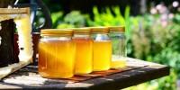Coldiretti: il clima mette in crisi le api, addio a 1 vaso di miele su 4