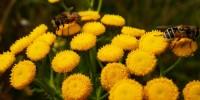 Pesticidi in città, WWF: salute di cittadini e impollinatori a rischio