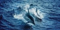 In Sardegna citizen science con il WWF per aggiornare ricerche su cetacei, squali e tartarughe marine