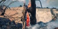 Incendi in Calabria, WWF: del parco dell'Aspromonte rischia di restare solo cenere
