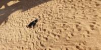 WWF: già oltre 400 tartarughe nate nella provincia di Siracusa