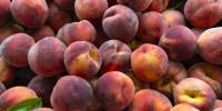 Coldiretti: a causa dei cambiamenti climatici, in Italia addio a 1 frutto su 4