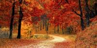 Alcuni dei boschi più belli d'Italia per innamorarsi dell'autunno