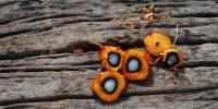 Olio di Palma sostenibile: obiettivo zero-deforestazione e certificazione di filiera
