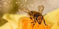 Pollinaction: il progetto per salvare gli impollinatori (e la nostra alimentazione)
