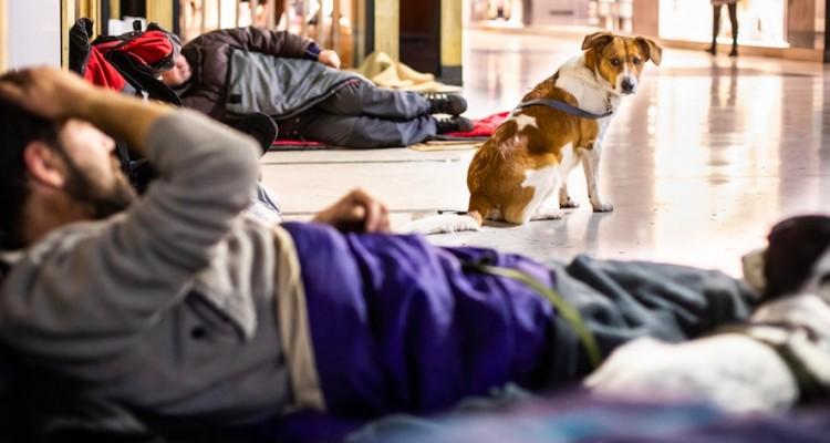 Milano: Save The Dogs scende in strada per aiutare i cani dei senza dimora