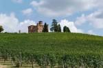 Passeggiare tra i vitigni centenari delle Langhe: la Collezione Grinzane Cavour è un viaggio nel tempo