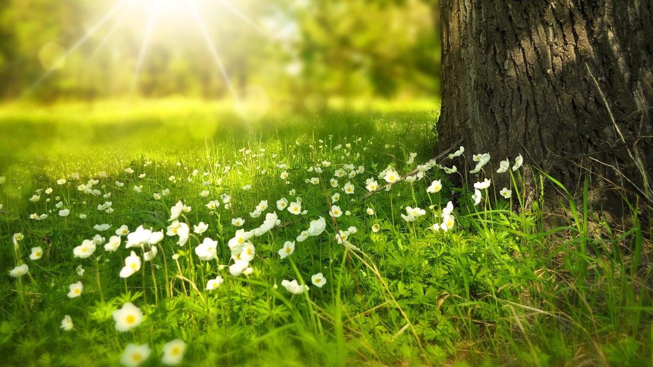 Il 22 Aprile è l'Earth day: 5 consigli per una pulizia eco-friendly della casa
